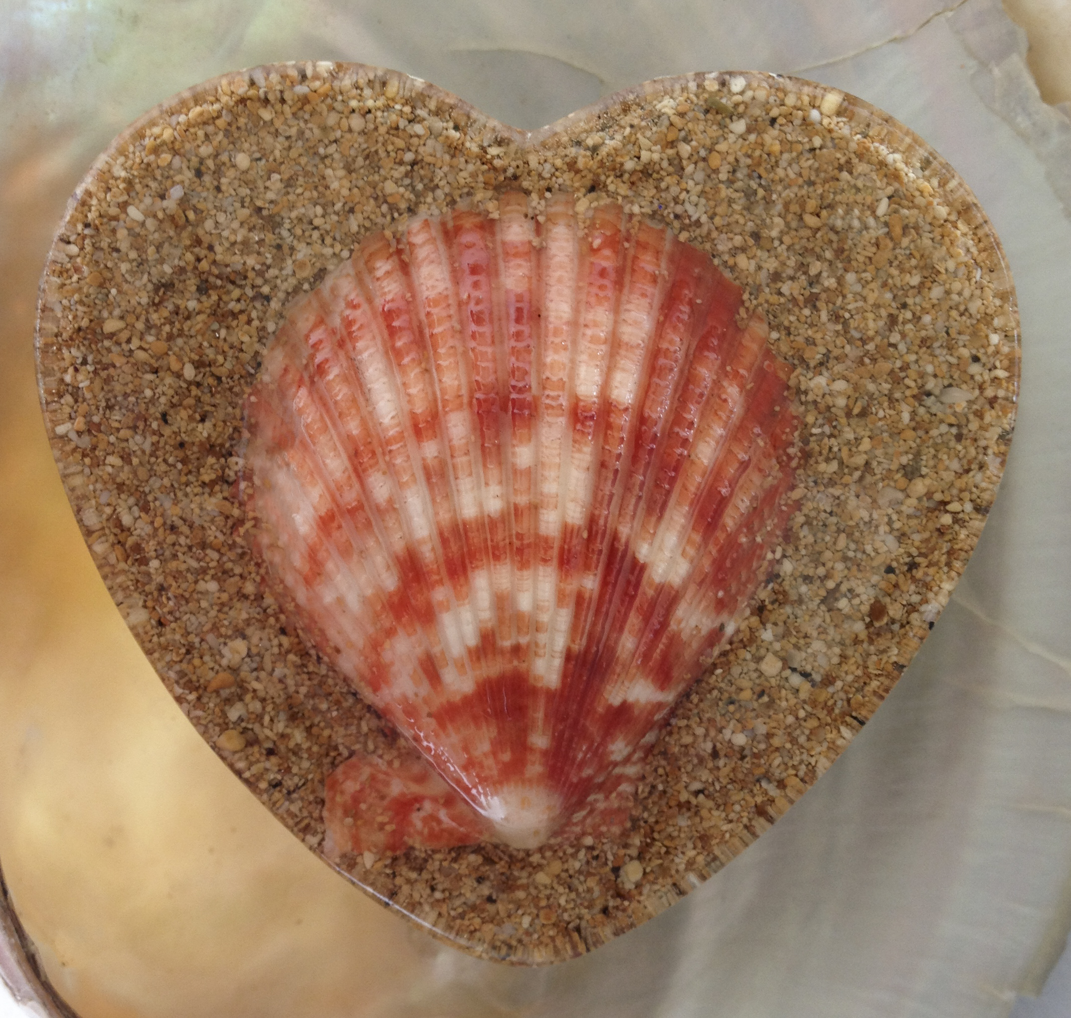 Orgonite Powerful Variegated Shell Heart. Orgonite for the home, office, car. Powerful, Beautiful Orgone Artwork. Cell phone , Tablet Mobile Device EMF/EMR Protection
